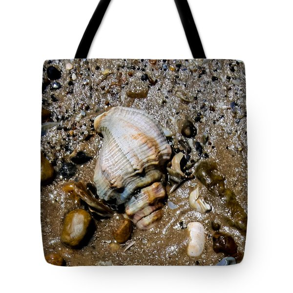 Conch Tote Bag by Toma Caul