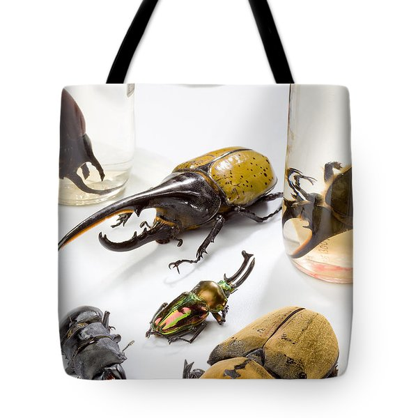 Confiscated Beetles Tote Bag by Science Source