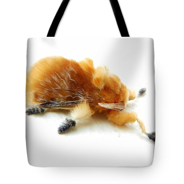 Cool Moth Tote Bag by Chad and Stacey Hall