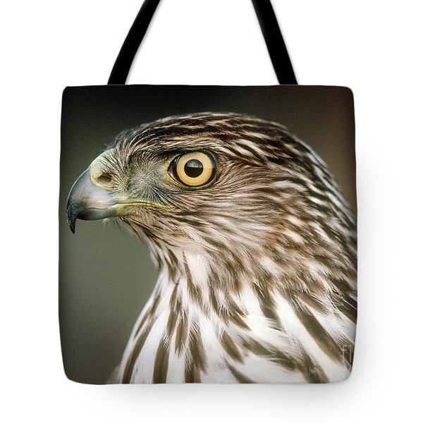 Tote Bag featuring the photograph Cooper's Hawk by Doug Herr
