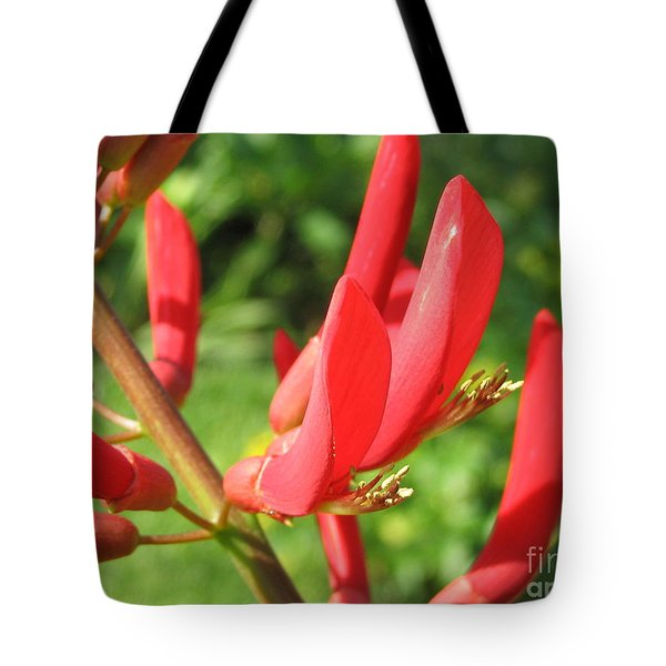 Coral Bean Tree Tote Bag by Mark Robbins