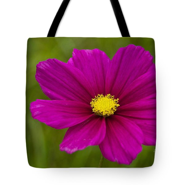 Cosmos Tote Bag by Sean Griffin