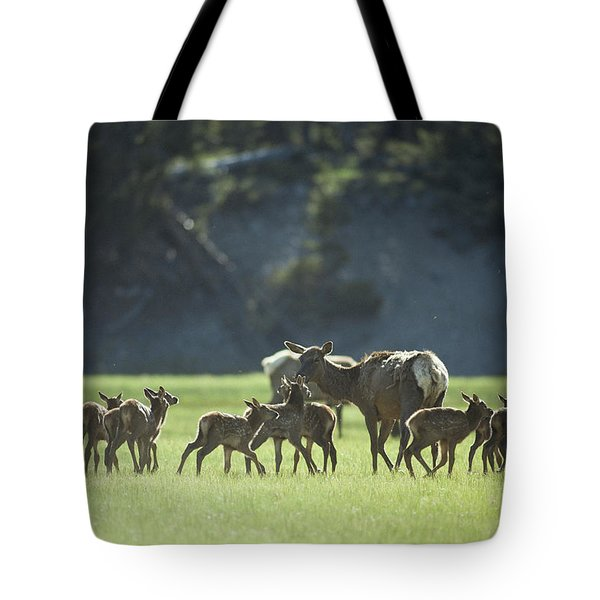 Cow Elk With Calves, Madison River Tote Bag