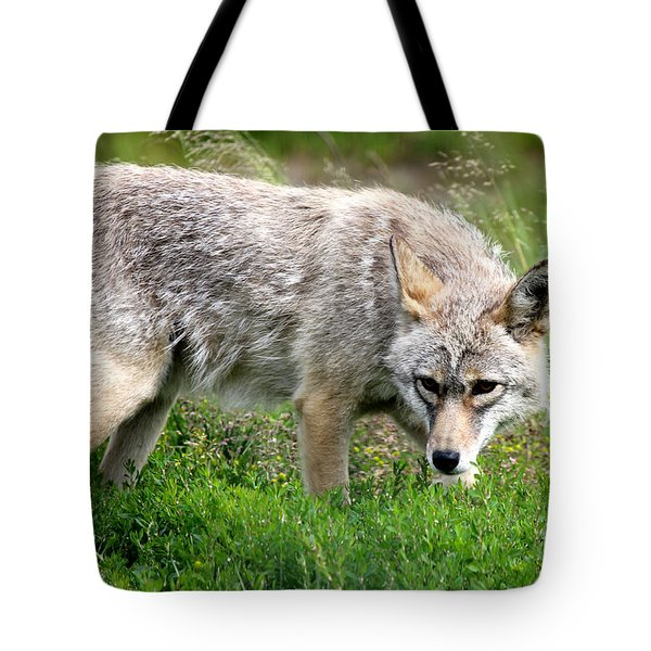 Tote Bag featuring the photograph Coyote On The Prowl by Kathy  White