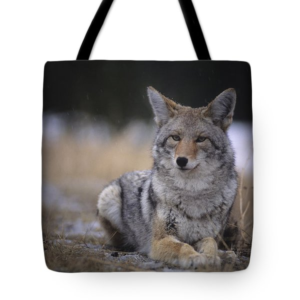Coyote Resting In Winter Grass, Snowing Tote Bag by Leanna Rathkelly