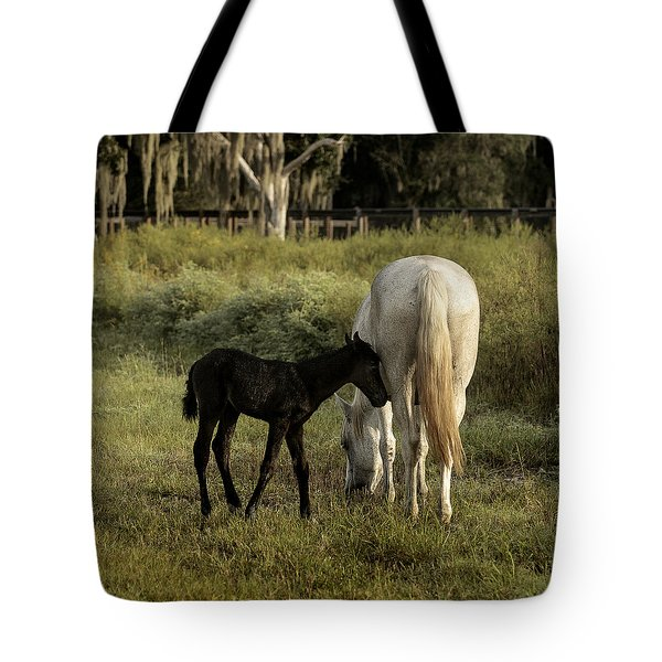 Cracker Foal And Mare Tote Bag