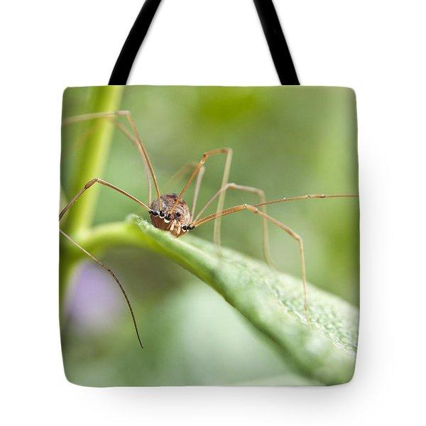 Creepy Crawly Spider Tote Bag