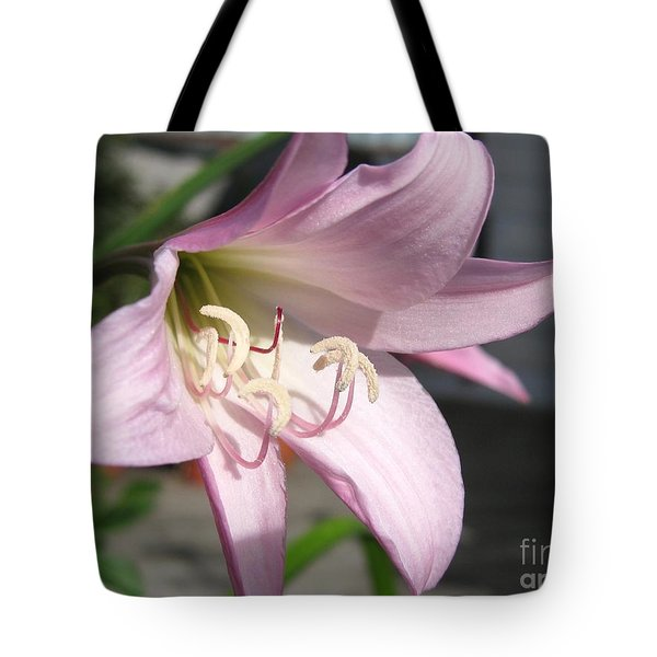 Tote Bag featuring the photograph Crinum Lily Named Powellii by J McCombie