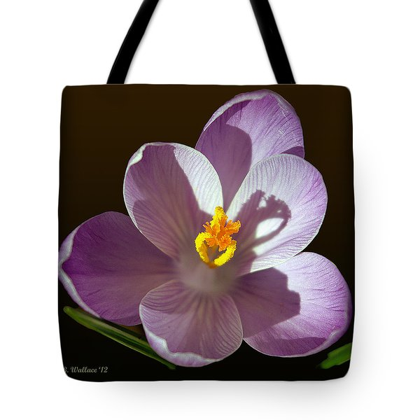 Crocus In Full Bloom Tote Bag by Brian Wallace