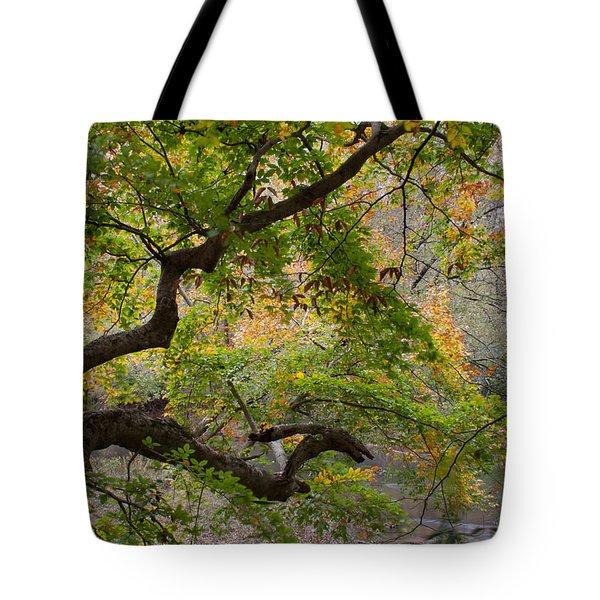 Crooked Limb Tote Bag by David Troxel
