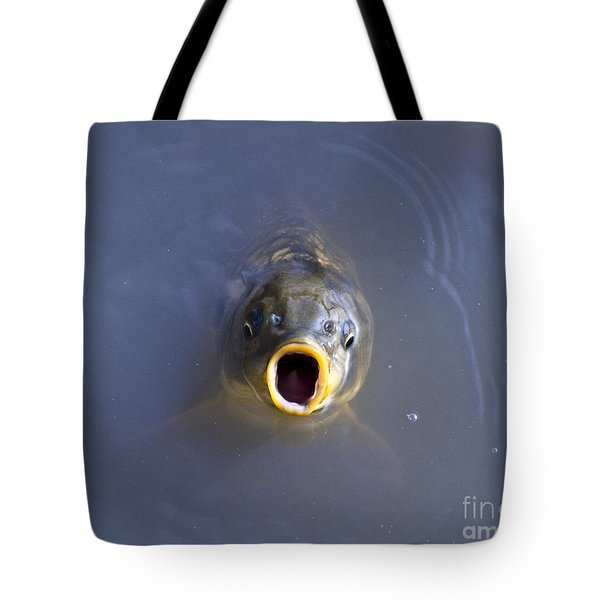 Curious Carp Tote Bag by Al Powell Photography USA