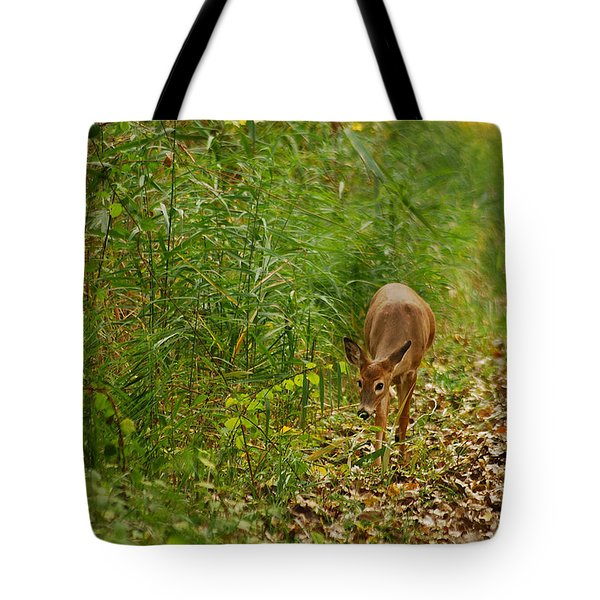 Curious Doe 9838 Tote Bag by Michael Peychich