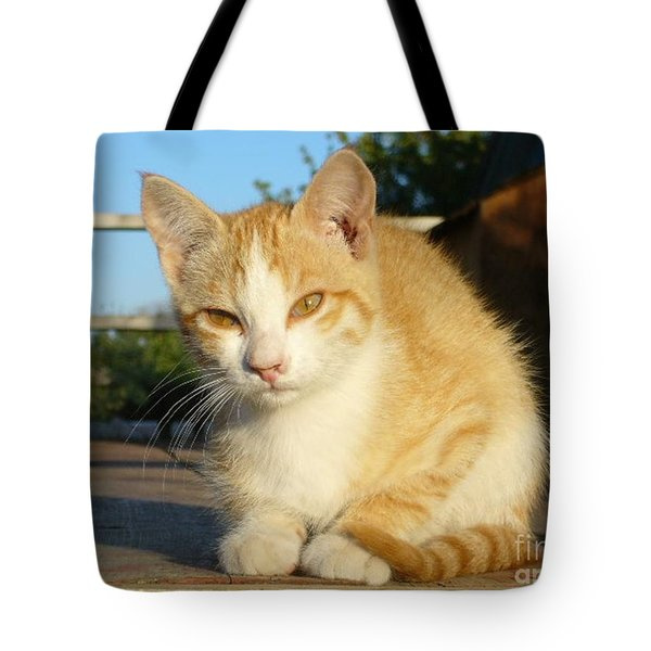 Tote Bag featuring the photograph Curious Kitten by Jim Sauchyn