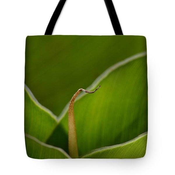 Curled Tote Bag