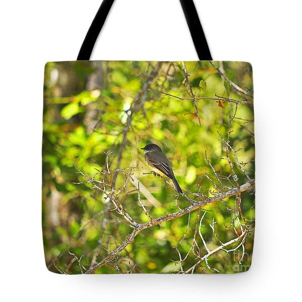 Cute Chickadee Tote Bag by Al Powell Photography USA