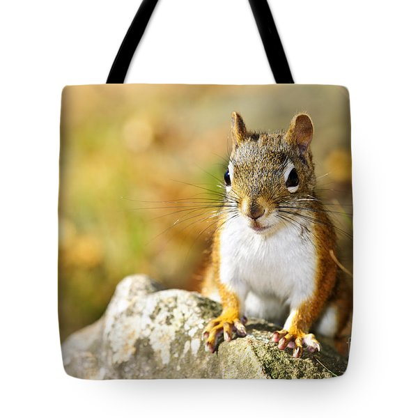 Cute Red Squirrel Closeup Tote Bag