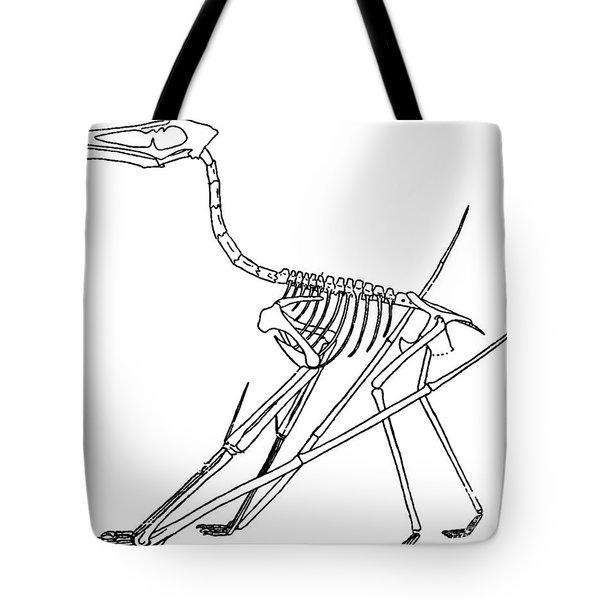Cycnorhamphus Suevicus Tote Bag by Science Source
