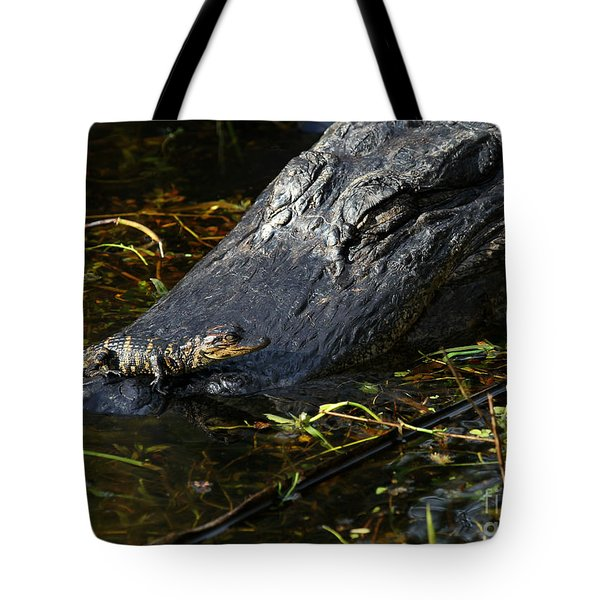 Daddy Alligator And His Baby Tote Bag by Sabrina L Ryan
