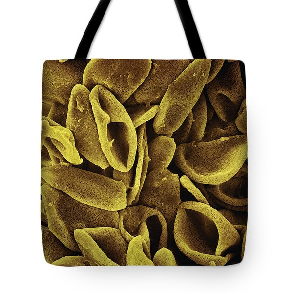Daffodil Narcissus Sp Pollen 700x Tote Bag by Albert Lleal