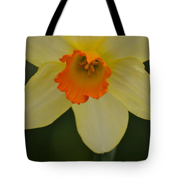 Daffodilicious Tote Bag by JD Grimes