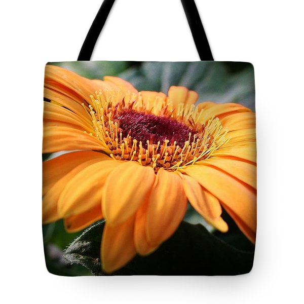 Tote Bag featuring the photograph Daisy Delight by Bruce Bley