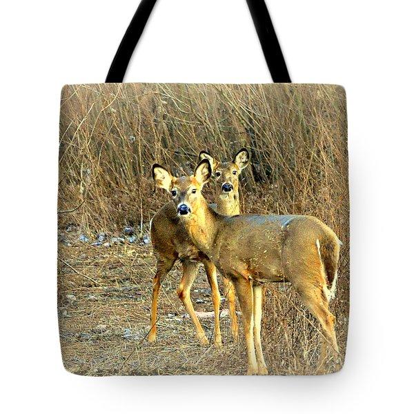 Deer Duo Tote Bag by Marty Koch