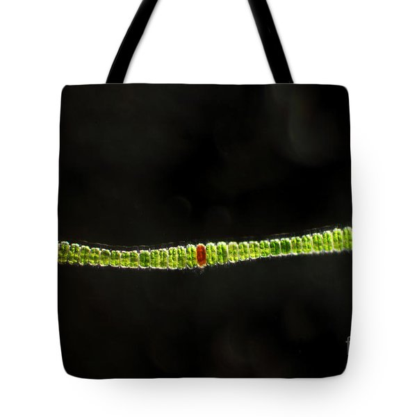 Desmidium Sp. Green Algae, Lm Tote Bag by Ted Kinsman