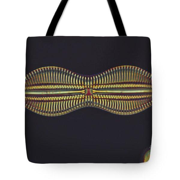 Diatom - Diploneis Crabro Tote Bag by Eric V. Grave