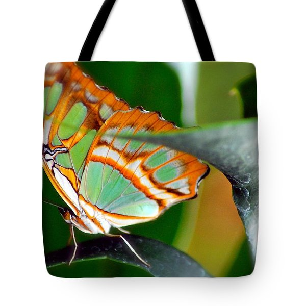 Tote Bag featuring the photograph Dido Longwing Butterfly by Peggy Franz