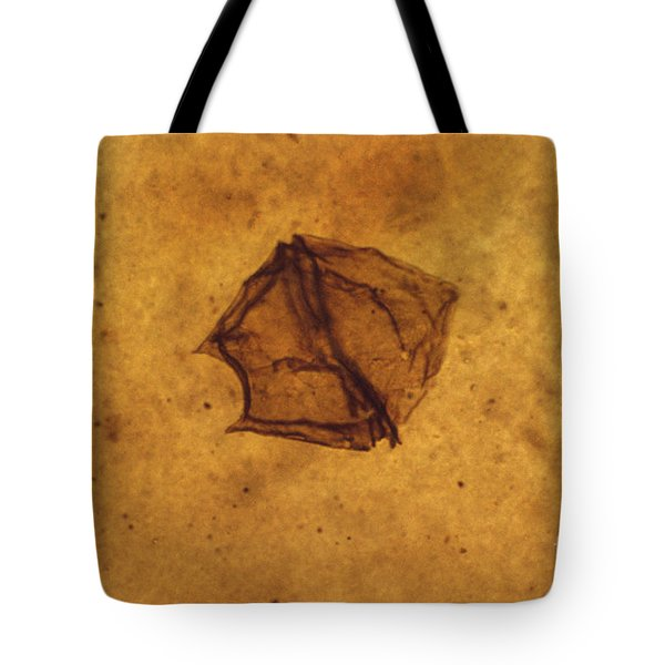 Dinoflagellate Fossil Tote Bag by Eric V. Grave