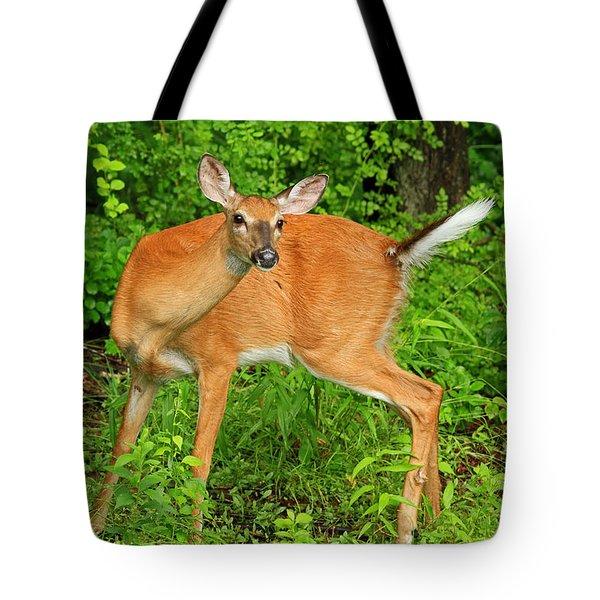 Doe A Deer Tote Bag by Karol Livote