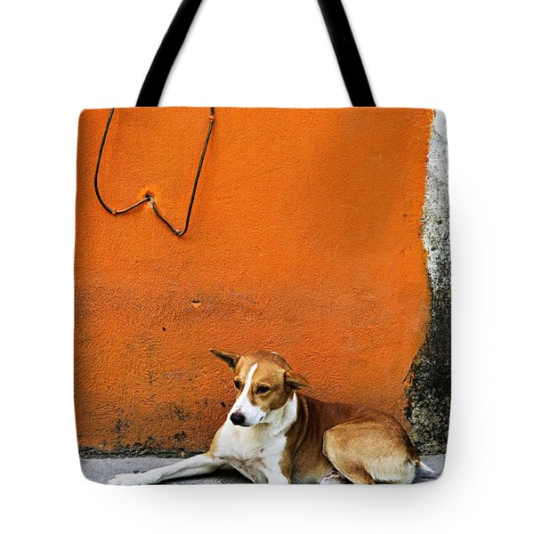 Dog Near Colorful Wall In Mexican Village Tote Bag by Elena Elisseeva
