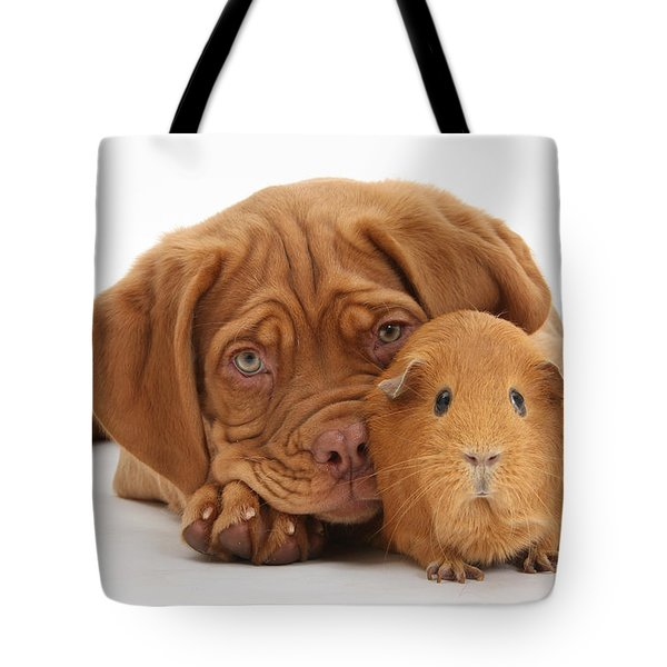 Dogue De Bordeaux Puppy With Red Guinea Tote Bag by Mark Taylor