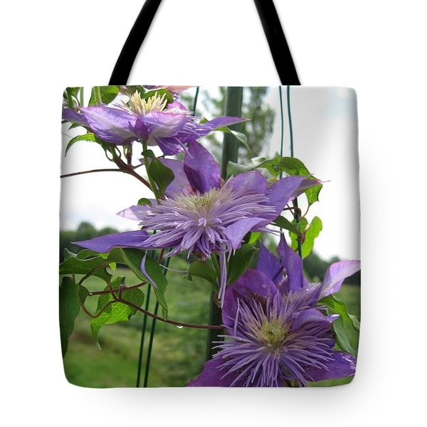 Tote Bag featuring the photograph Double Clematis Named Crystal Fountain by J McCombie