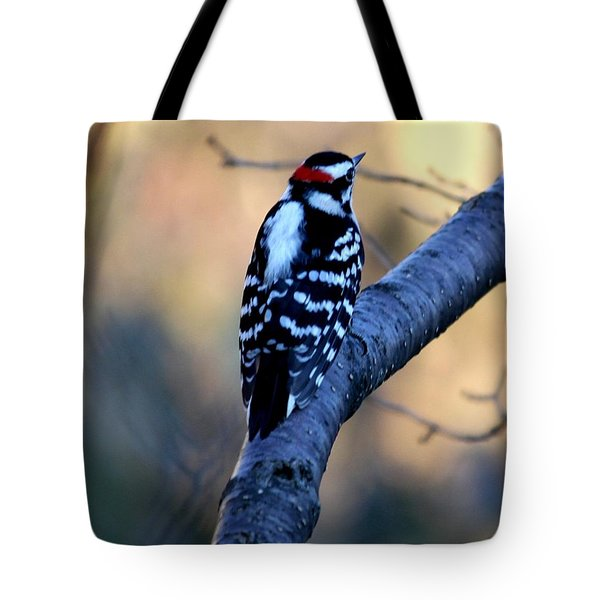 Tote Bag featuring the photograph Downy Woodpecker by Elizabeth Winter