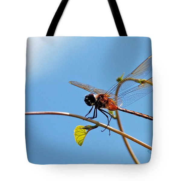 Dragonfly On A Vine Tote Bag