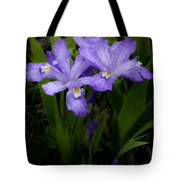 Dwarf Crested Iris Tote Bag by Rob Travis