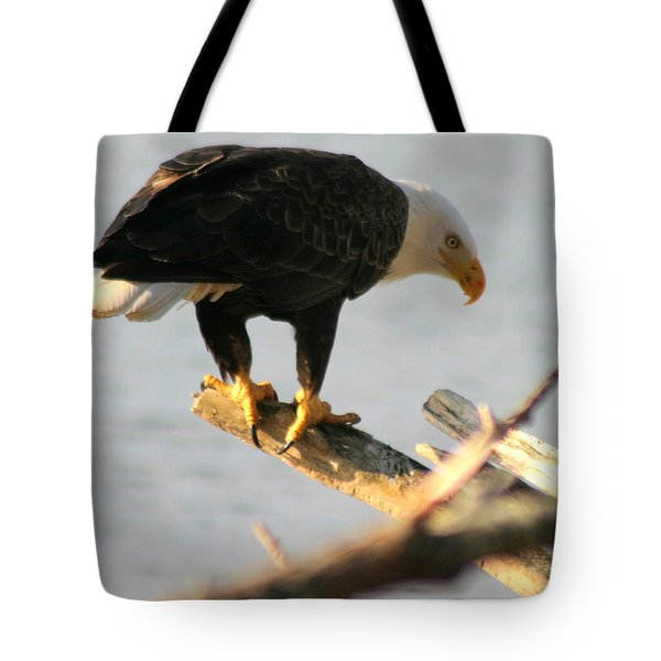 Eagle On His Perch Tote Bag by Kym Backland