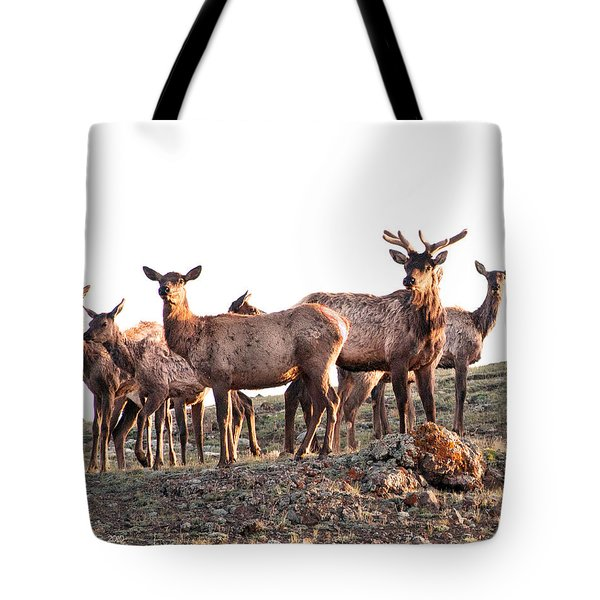 Early Morning Herd Tote Bag
