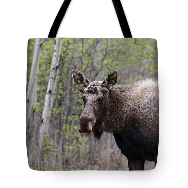 Tote Bag featuring the photograph Early Spring by Doug Lloyd