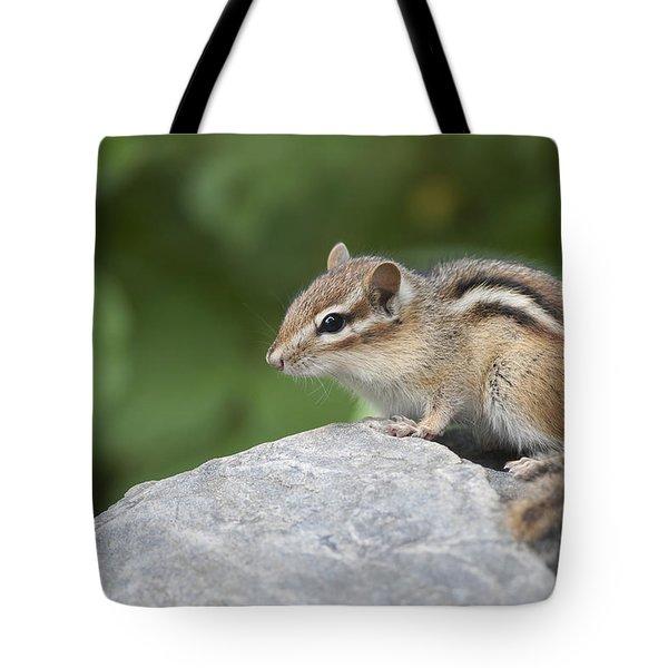 Eastern Chipmunk Tamias Striatus Tote Bag by Amy Kay