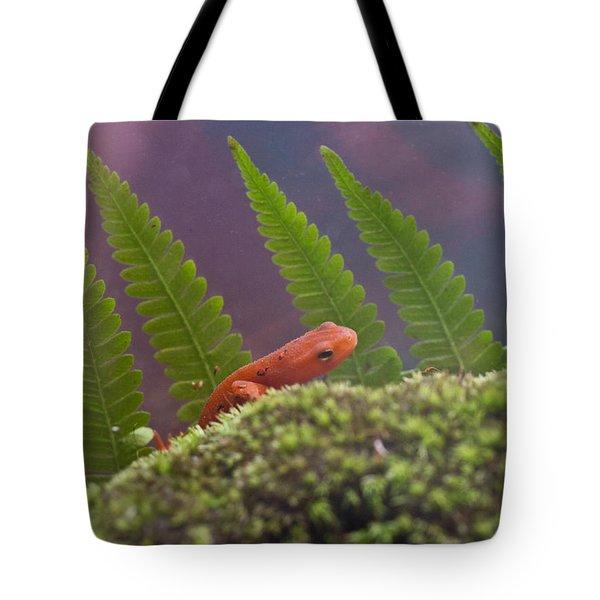Eastern Newt 3 Tote Bag