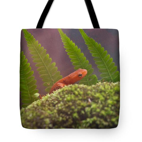 Eastern Newt 4 Tote Bag