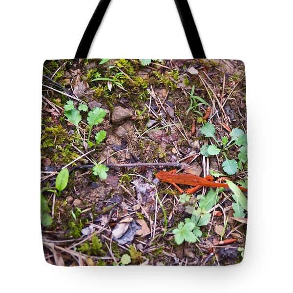 Eastern Newt Juvenile 1 Tote Bag