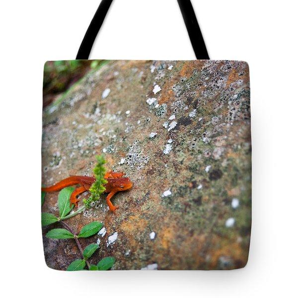 Eastern Newt Juvenile 8 Tote Bag