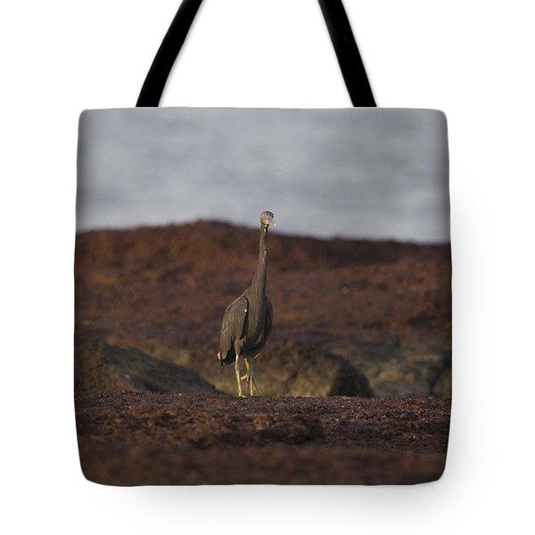Eastern Reef Egret-dark Morph Tote Bag by Douglas Barnard