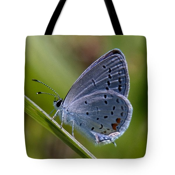 Eastern Tailed-blue Butterfly Din045 Tote Bag