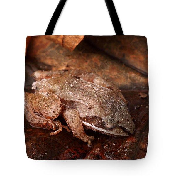 Eastern Wood Frog Hibernating Tote Bag by Ted Kinsman
