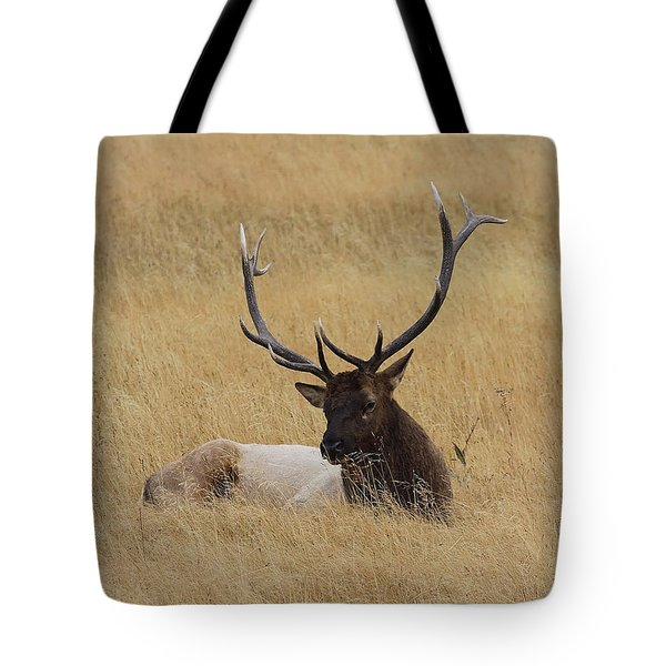 Tote Bag featuring the photograph Elk In The Meadow by Steve McKinzie