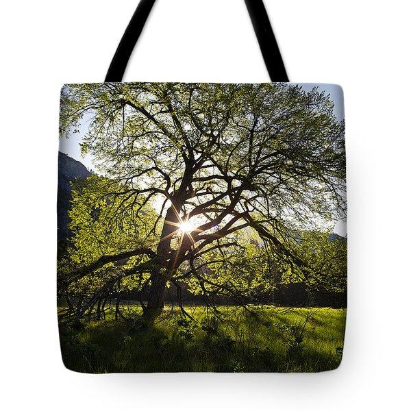 Elm In Cook's Meadow Tote Bag by Rick Berk